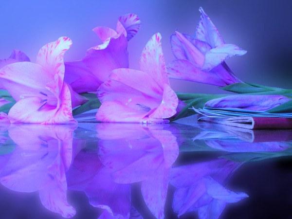 Что такое розовые сны