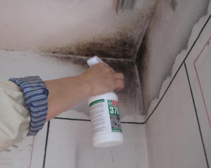 Плесень на стенах - источник заболеваний