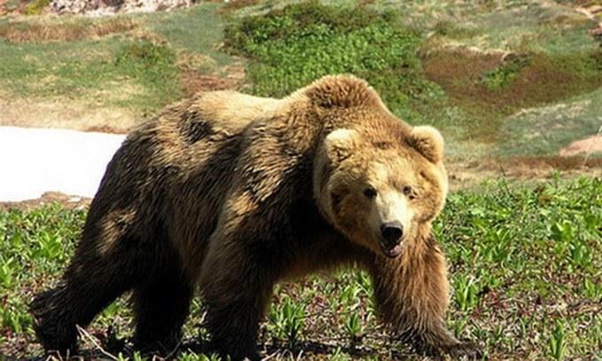 """Откуда пошло выражение """"медведь на ухо наступил"""""""