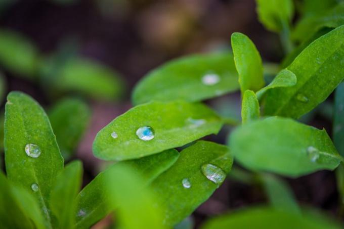 Почему трава зеленая