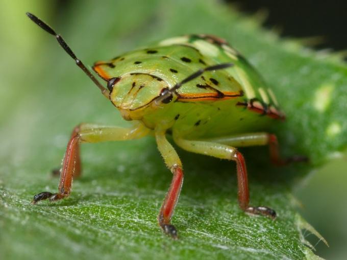 Можно ли избавиться от тараканов и клопов ультразвуком