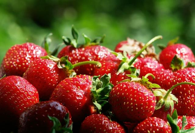Клубника - одна из самых популярных отечественных ягод