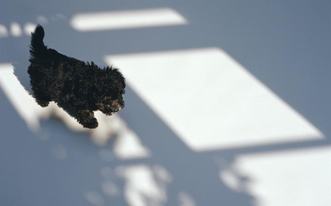 Воспитание щенка - благодарный труд