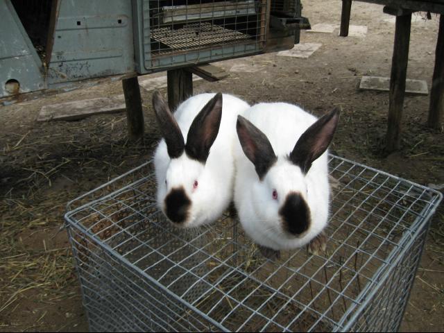 Как ухаживать за кроликами зимой
