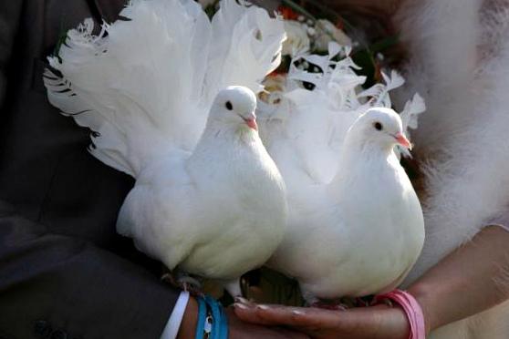 Голуби на свадьбе: приметы и советы