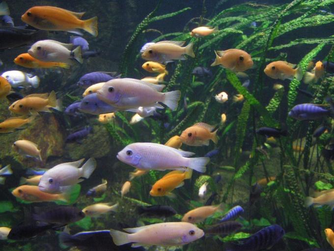 Как предпочесть сухой корм для аквариумных рыбок