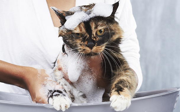 Выбор шампуня для кошки