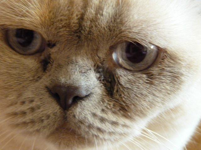 магические свойства бурые слезы у кошек что