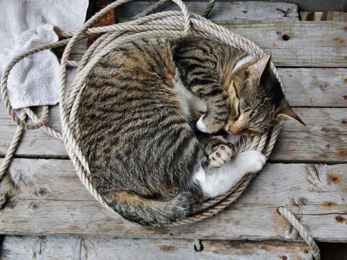 Почему кошки любят спать