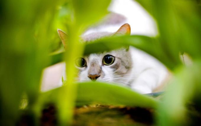 Кошка прячется в траве, готовясь к очередной перебежке