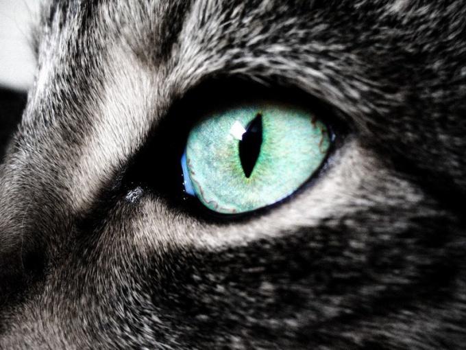 Как кошки видят мир