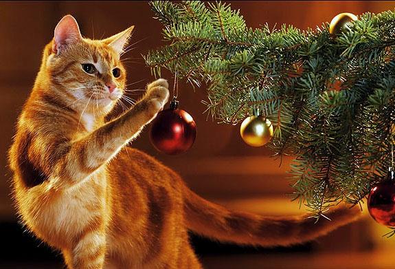 Кот и Новый год: чем опасен праздник для вашего питомца