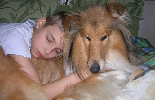 Мир собаки и кошки