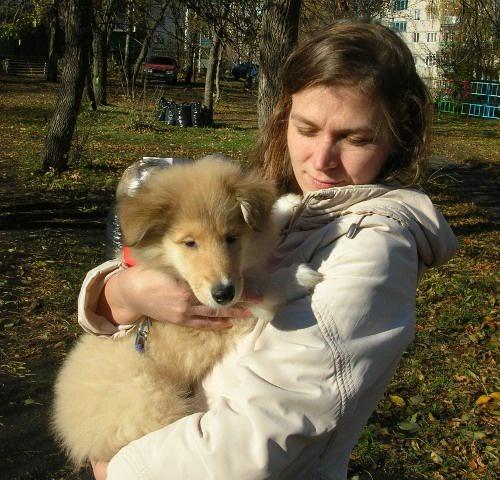 Как купить щенка колли