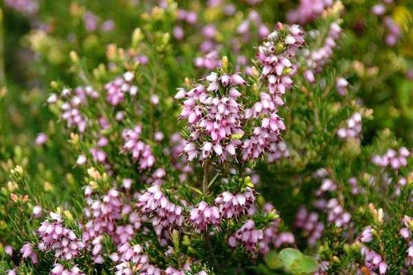Какие дикорастущие растения съедобны