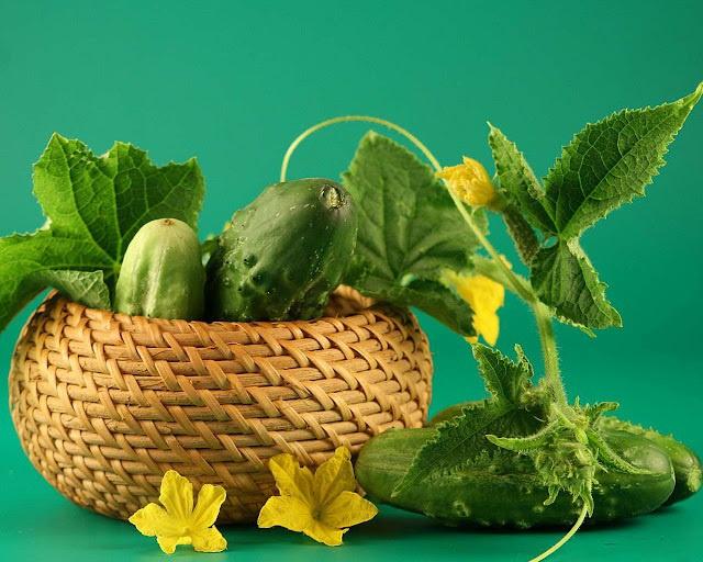 Как вырастить вкусные огурцы