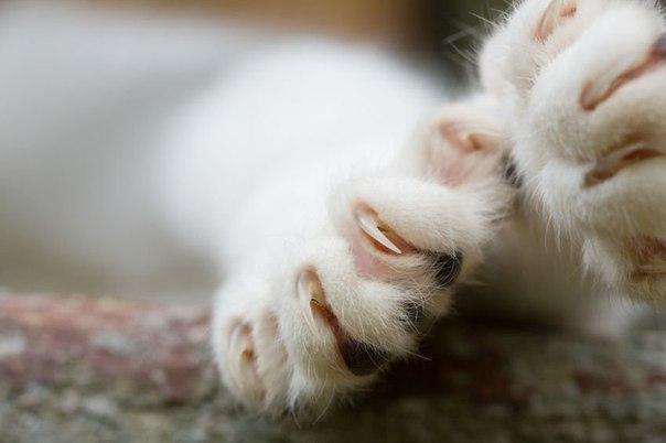 Как ухаживать за когтями домашней кошки