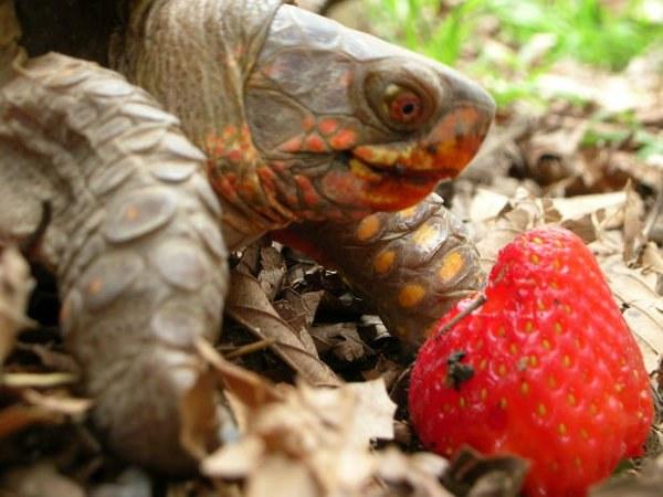 Чем питаются черепахи в домашних условиях