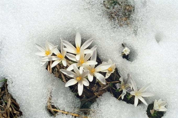 К чему снится наступление весны