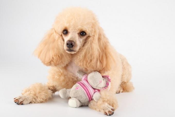 Какая порода собак лучше для дома с детьми