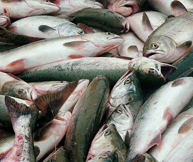 К чему мужчине снится рыба
