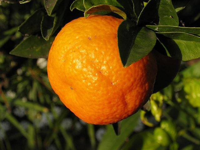 How to plant home orange