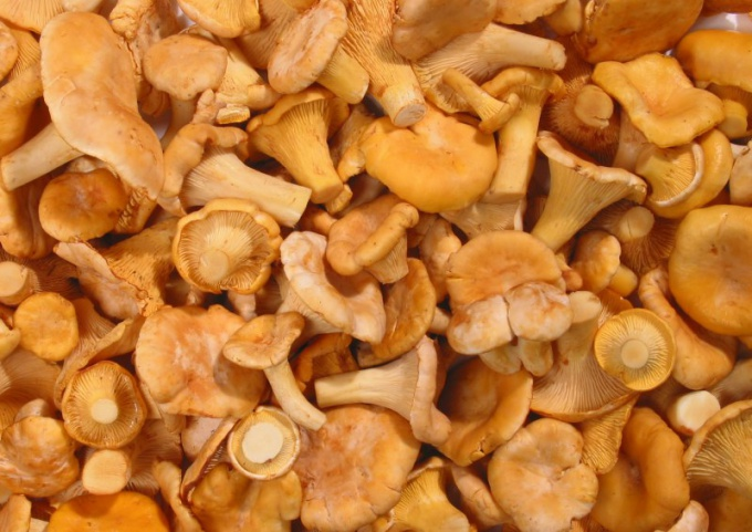 Chanterelles can be cooked in different ways