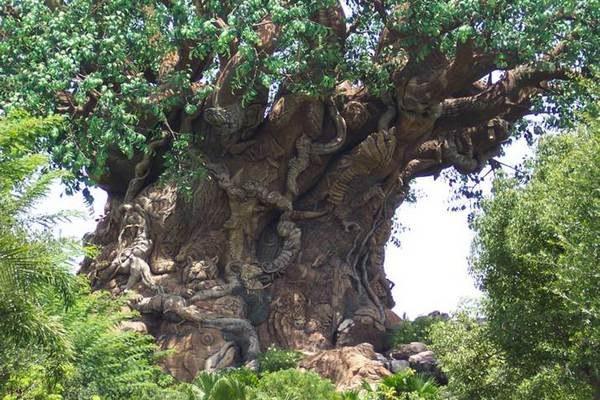 Что такое железное дерево