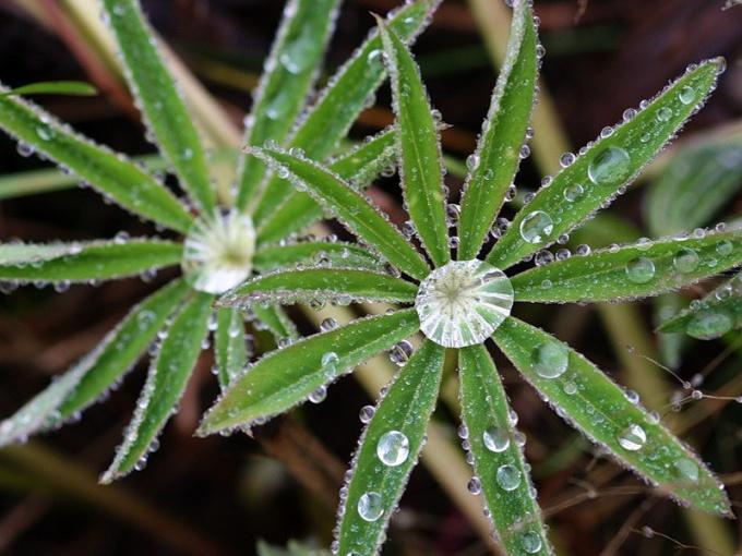 Роса — капли дистиллированной воды