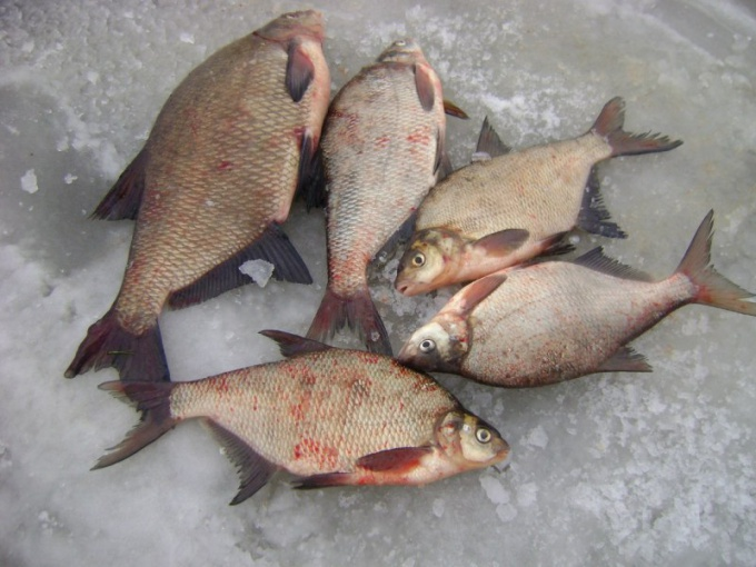 Skimmers: winter catch