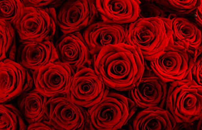 A bouquet of ruby roses a mandatory attribute of the fortieth anniversary