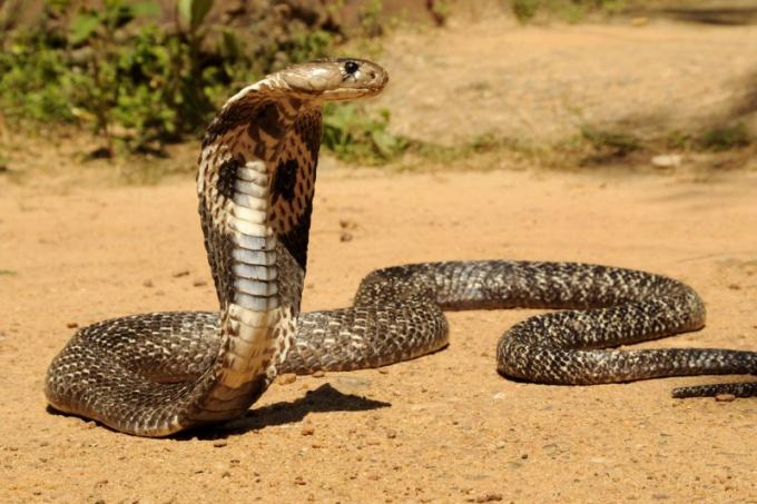 Самое опасное животное в мире