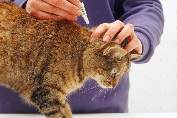 Like cats effective against fleas