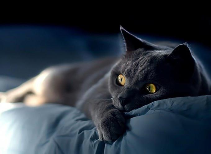кошка не ест не свежий сухой корм