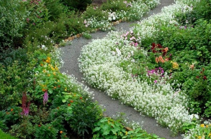 Well-kept blooming garden is like a work of art