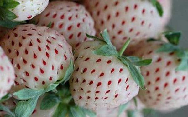 Что такое гибридное растение