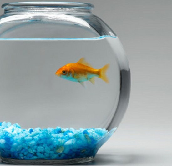 How to keep a goldfish in a fishbowl