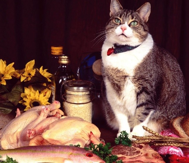Is it possible to feed a domestic cat raw meat