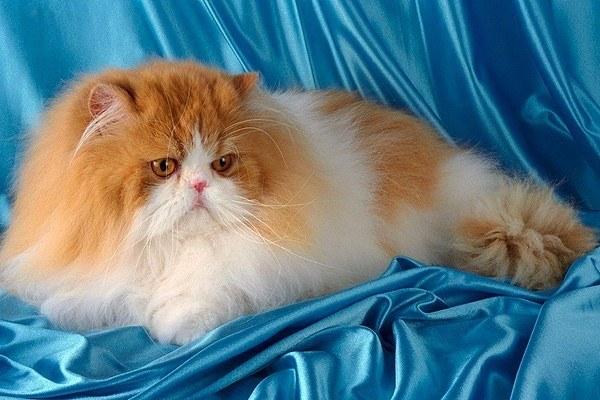 Чем вредна кошачья шерсть