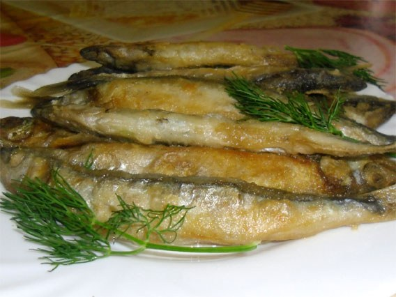 Meals of capelin work – yum!