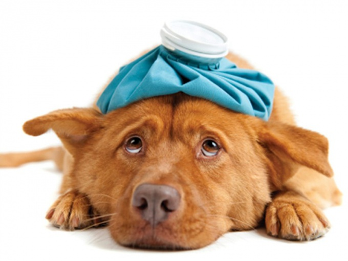 зуд при аллергии у собаки