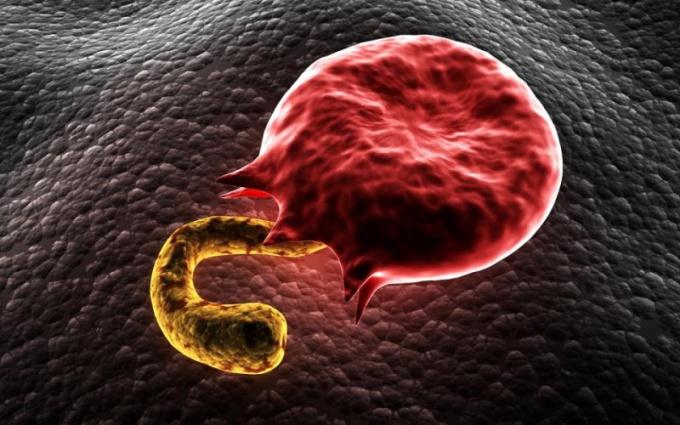 Какие организмы являются возбудителями малярии