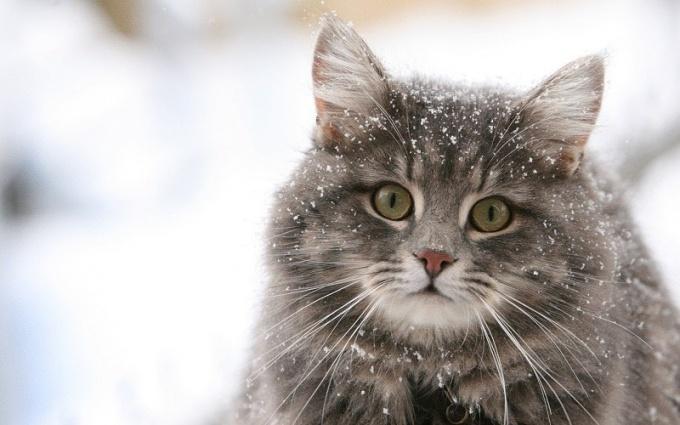 Чем обрабатывать царапины от кошки