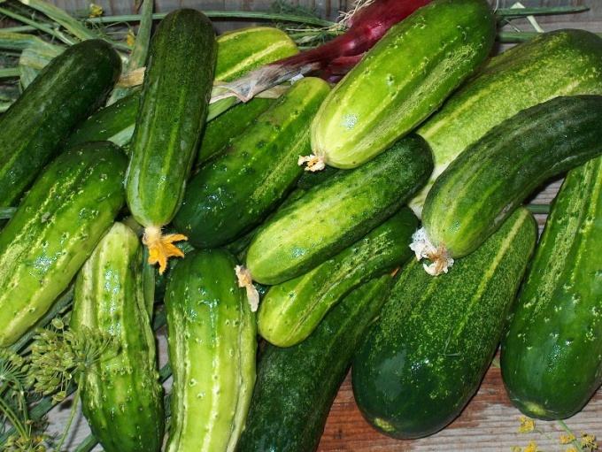 What to do with large cucumbers