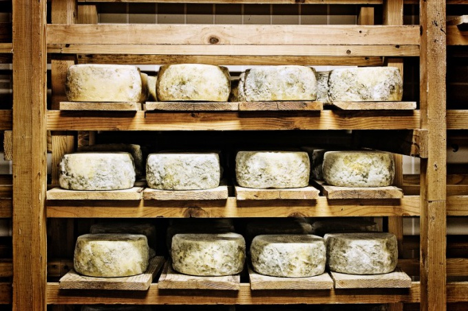 Что полезнее, сыр или брынза