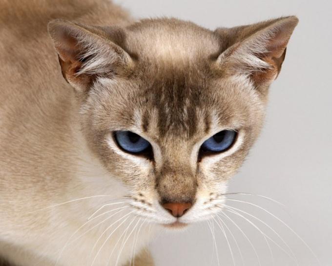 если кот гадит где попало как отучить