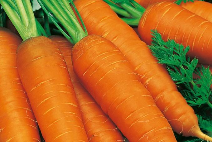 Когда сеять морковь на зиму