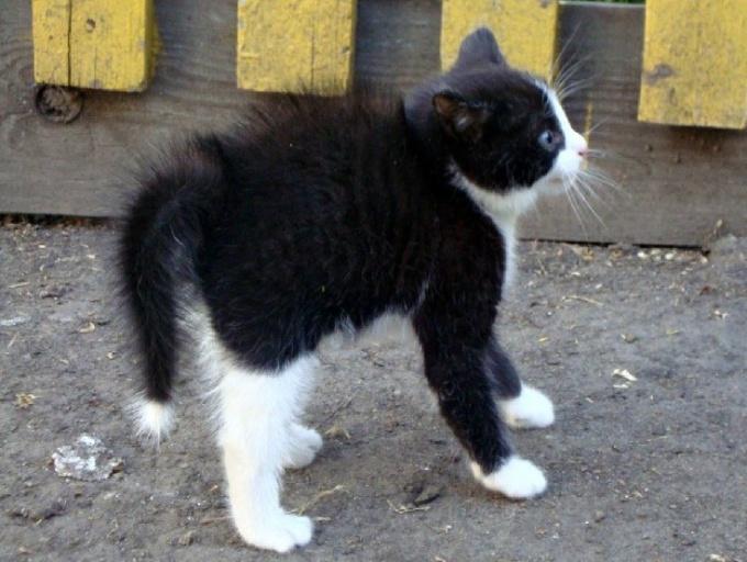 Зачем кошка изгибает спинку, когда ей грозит опасность