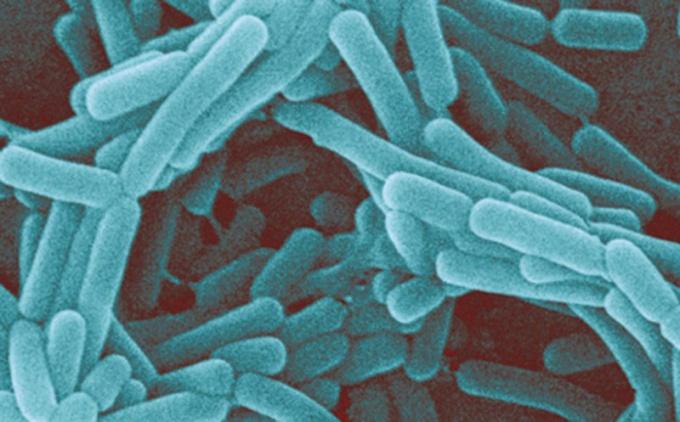 bakteriy-vo-vlagalishe
