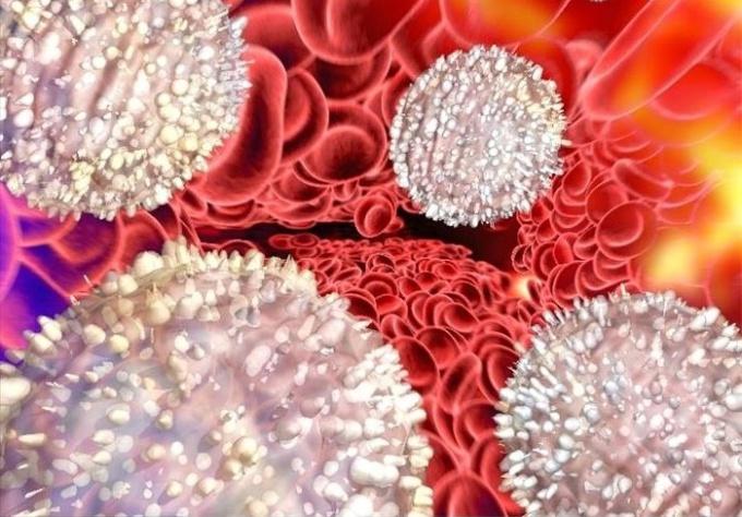 Почему могут быть повышены лейкоциты в крови